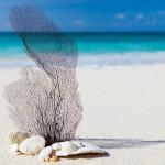 Kuba Cayo Largo Strand Urlaub 2015 Rundreise