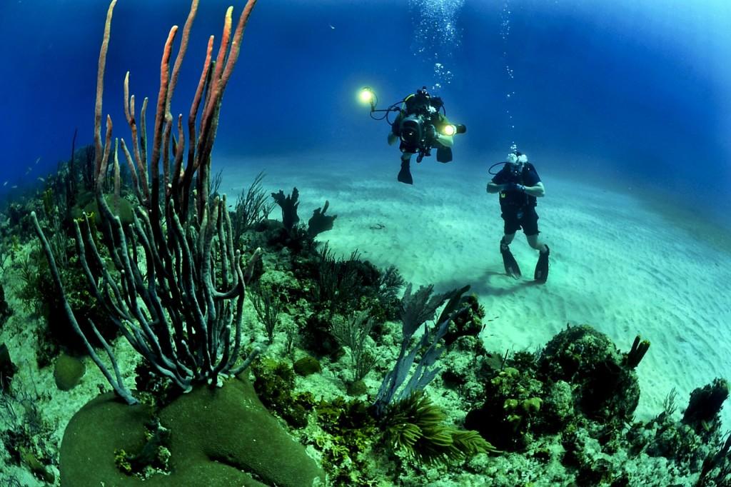 Kuba Christoba Tauchen Korallen