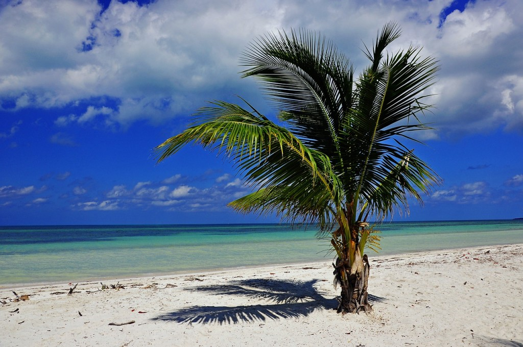 Kuba Strand Urlaub 2015 Rundreise Palme