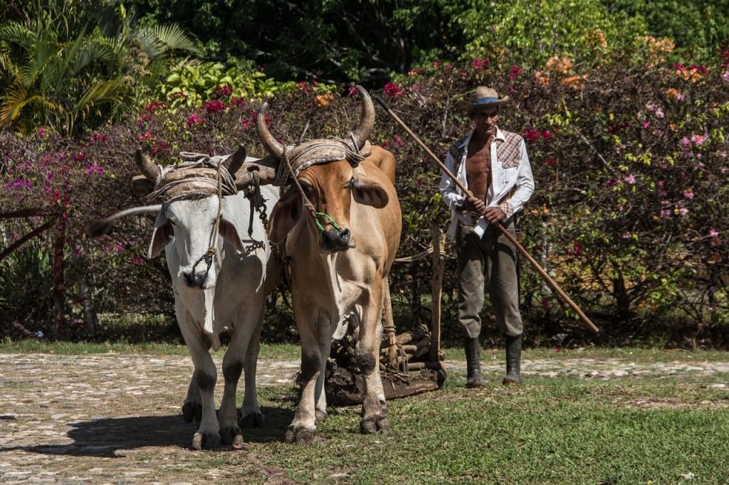 Kuba Urlaub Trinidad Landwirtschaft