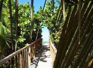 Kuba Varadero Strand Natur Palme